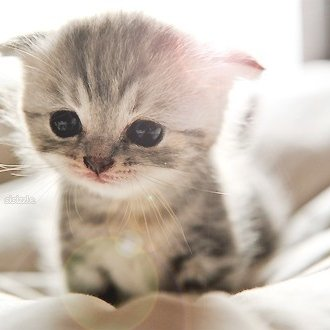 Insanely Cute Kittens On Twitter This May Trick You Eyes