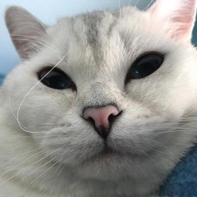 Cat Feelings (@catfeeIings) Twitter profile photo