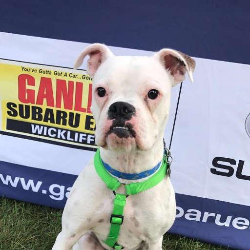 Ganley Subaru East >> Ganley Subaru Subaruwickliffe Twitter Profile And