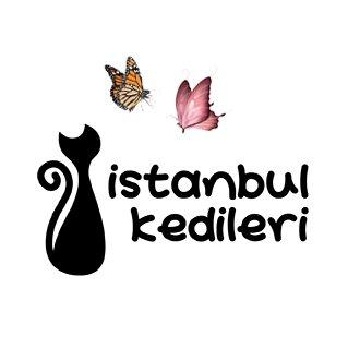 @CatsofIstanbul