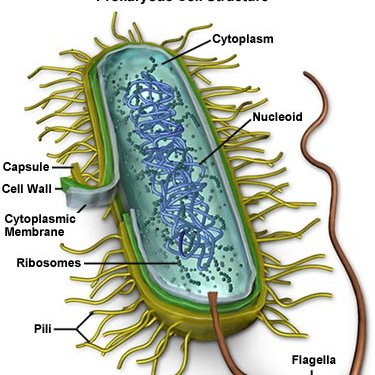 "common bacterium on Twitter: ""..."