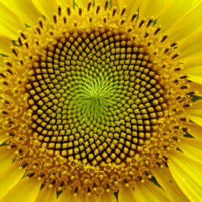 fibonacci sequence essay Fibonacci and nature essaysthe math project topic eddy and i have chosen is the fibonacci sequence and it.