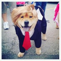 Conservative Pets 🐶