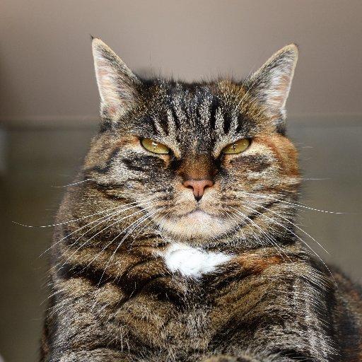 Prof. Dr. Mean Cat