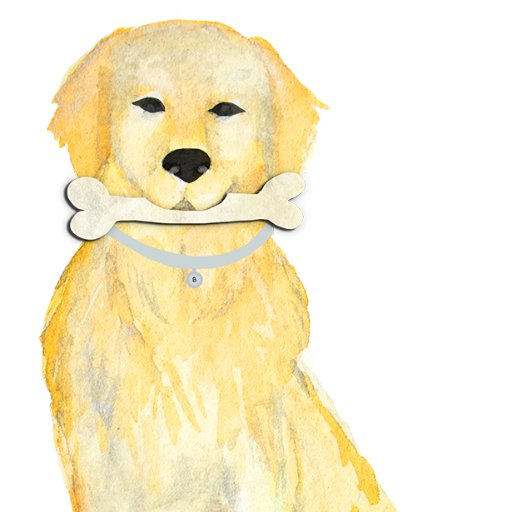 Dog With A Bone- Educational Coaching Unleashed!
