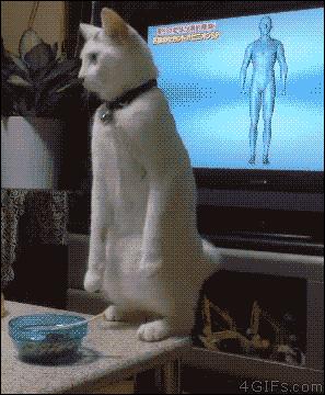 突然猫になってしまい困惑する人