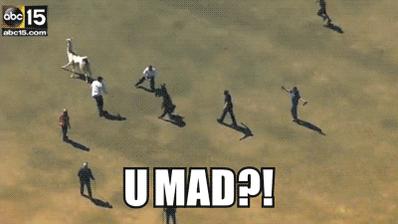 Guyz remember when... #LlamaDrama #Llamachase http://t.co/cBmXQZBLuz