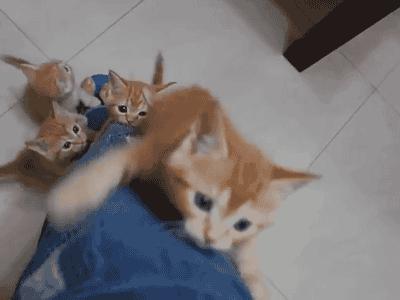 猫好きの人間族を憤死させる猫族の奥義『仔猫脚登り』 pic.twitter.com/VdW6NxDz8F