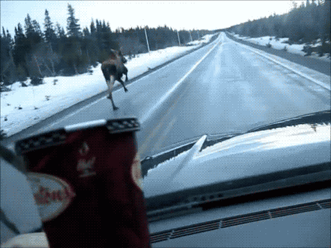 Have you seen the most Canadian GIF ever? http://t.co/Z9t0SAUWwG