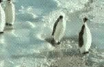 """I didn't read the book but I watched the mov-"" #WorldPenguinDay https://t.co/iFRWXlFLaL"
