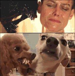 Let's celebrate #AlienDay ! Tell us your favorite Alien film! https://t.co/NjBe31EXDO