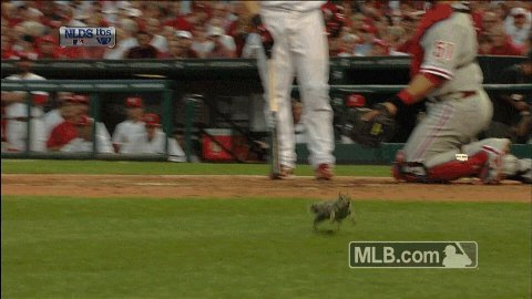 They just love baseball. #SquirrelAppreciationDay https://t.co/nAHsKni...