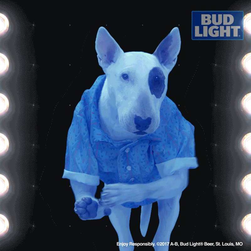 Bud light dog commercial drink responsibly lightneasy bud light dog commercial drink responsibly www lightneasy net mozeypictures Choice Image