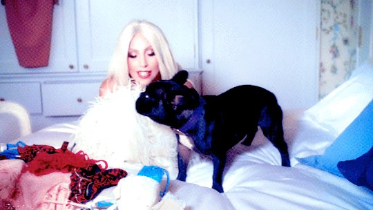 Happy #NationalLoveYourPetDay to @LadyGaga!   p.s. Can we get more sna...