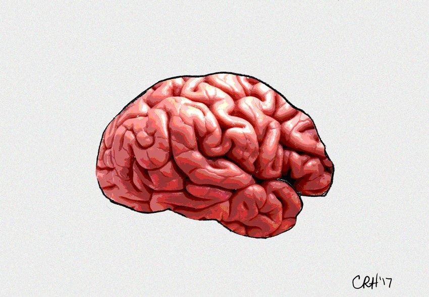 гифка мозга нет вот