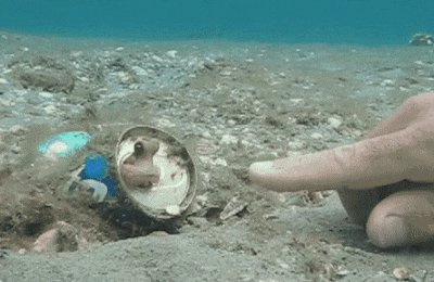 RT @OctopusInky: #nationalhighfiveday Retweet to show you support our oceans🐙 https://t.co/gIfubfI10t