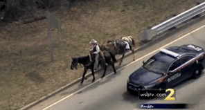 So a guy on a horse pulling another horse was pulled over in downtown Atlanta: http://t.co/JvhshiphOb http://t.co/I7b9xRl9Lg