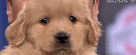 Happy #NationalPuppyDay, pals! http://t.co/sZxKTrXdXN