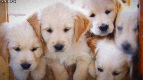 Happy #NationalPuppyDay! http://t.co/qCsnGVRruj
