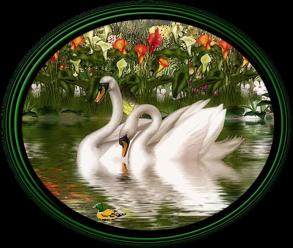 Анимашки лебеди, открытка новому году