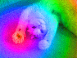 Rainbow cat biscuits for everyone!!  (not sure who made this but it's AWESOME!!) http://t.co/xa1Ta6jANq