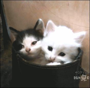 子猫  #鬱な気分が吹っ飛ぶ画像ください http://t.co/kfgNg31104