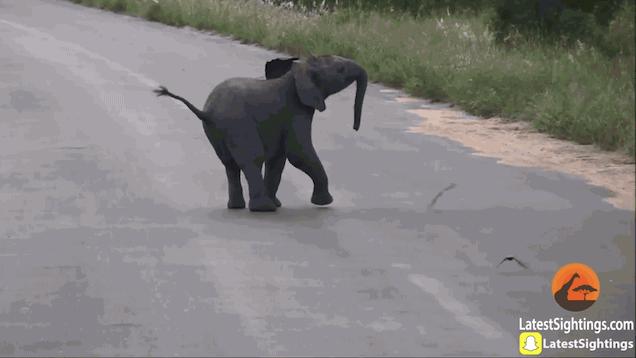 Baby elephant gif