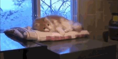 毛布でゴニョゴニョして遊んでいたら、そのまま垂直落下していったネコにゃん。(w) pic.twitter.com/RwOa8R0doY