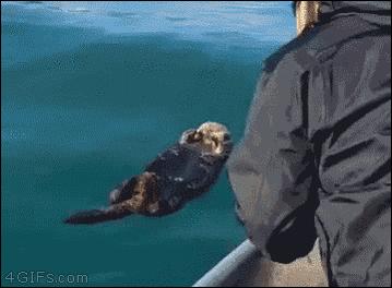 のんびり海で浮かんでいたラッコ。人間に遭遇wwww http://t.co/VDAhpjsstN #ラッコ #人間 #海 #遭遇wwww http://t.co/S7qbhSofT7