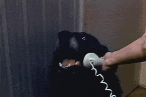 quem é? é o dog http://t.co/OCNtMUfimk