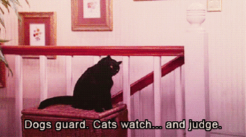 Happy #BlackCatDay! We are throwing it back to Salem because he was the coolest cat on Sabrina the Teenage Witch! https://t.co/rmuExXb6ca