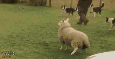 Re-re-retweeting the Sheep of Joy for anyone who missed it - https://t.co/I3eoY7Much