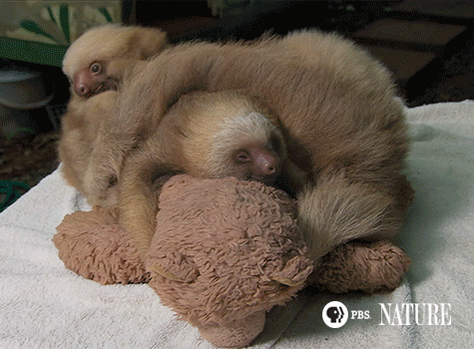 Just another lazy Monday morning... Do we HAVE to get up? #NaturePBS https://t.co/1qHVAzAA8b