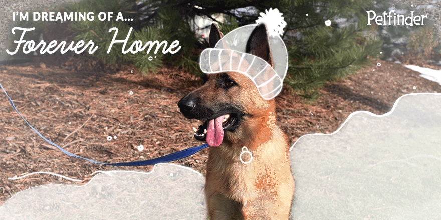 There are plenty of cats & dogs dreaming about forever homes. Make a wish come true. Adopt: https://t.co/lBHKkaHYVp https://t.co/ENtphc0jbq