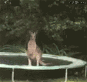 kangaroo + trampoline goes about as well as can be expected https://t.co/xBvoduokjS