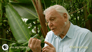 One gif to sum up why we love David Attenborough. https://t.co/yQN9Elms9c