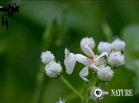 Delicate flower? Not so much. #NaturePBS https://t.co/maaqhTq1rD
