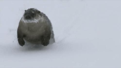 Heading out of work like... #FridayFeeling #Snowzilla2016 https://t.co/UozFH7NqUW