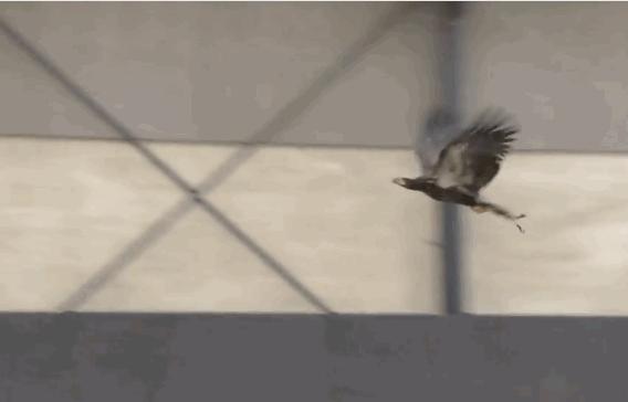 うは / 不法飛行のドローンを強制着陸させるために、訓練した鷲に襲わせるオランダ警察   TechCrunch Japan https://t.co/9hR6NrYAw4 https://t.co/Db82TiSNmY