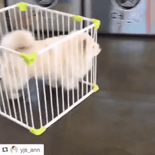 YOUR PUNY CAGE CAN'T CONTAIN ME https://t.co/BkPjPCaQXR