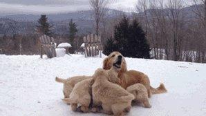 #Puppies !! https://t.co/WJMny8LM3p