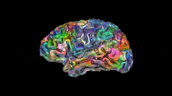 Words are clustered in the brain according to their meaning. Now scientists have a map https://t.co/setXqPZAli https://t.co/3OWD7cnvdo