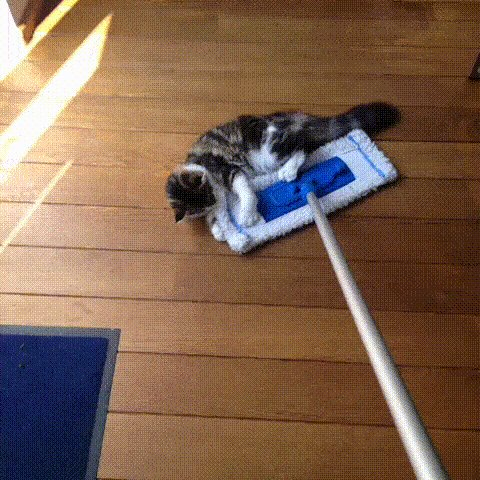 Housekeeping Attempt #117 https://t.co/ryPTSsq9ba
