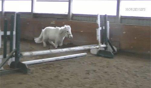 Always remember to dream big #HorseHour https://t.co/82DEoaLtbf