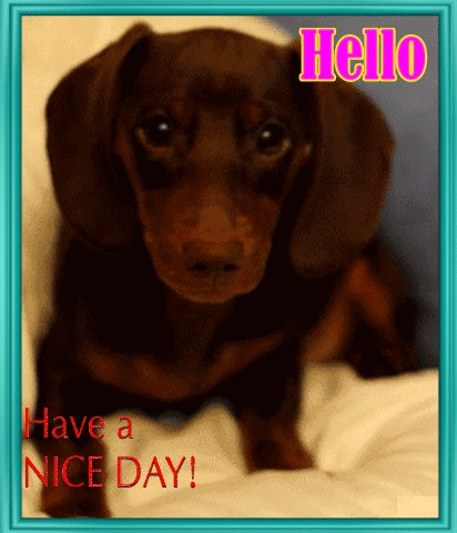 @Berti_and_Ernie wishing you a paww-fect day☺️ We honor the love you've for your #dog pals~ https://t.co/aVdQyOpY2A https://t.co/c6Cka5XweG