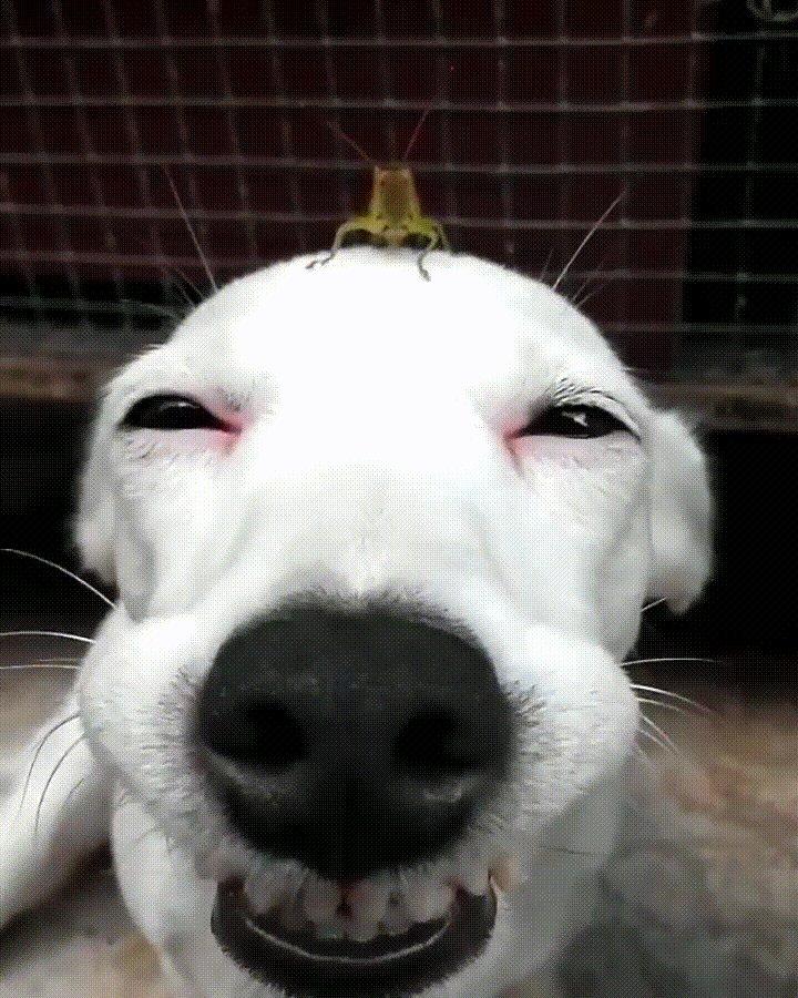Гифки собаки смешные