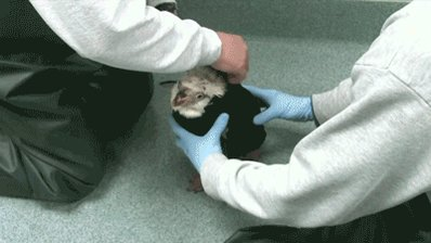 SeaWorld Makes Mini Wetsuit for Penguin Losing Feathers.