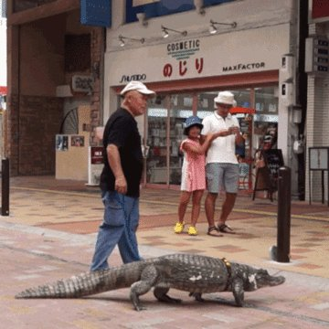 This man and his alligator have been best friends for over 30 years