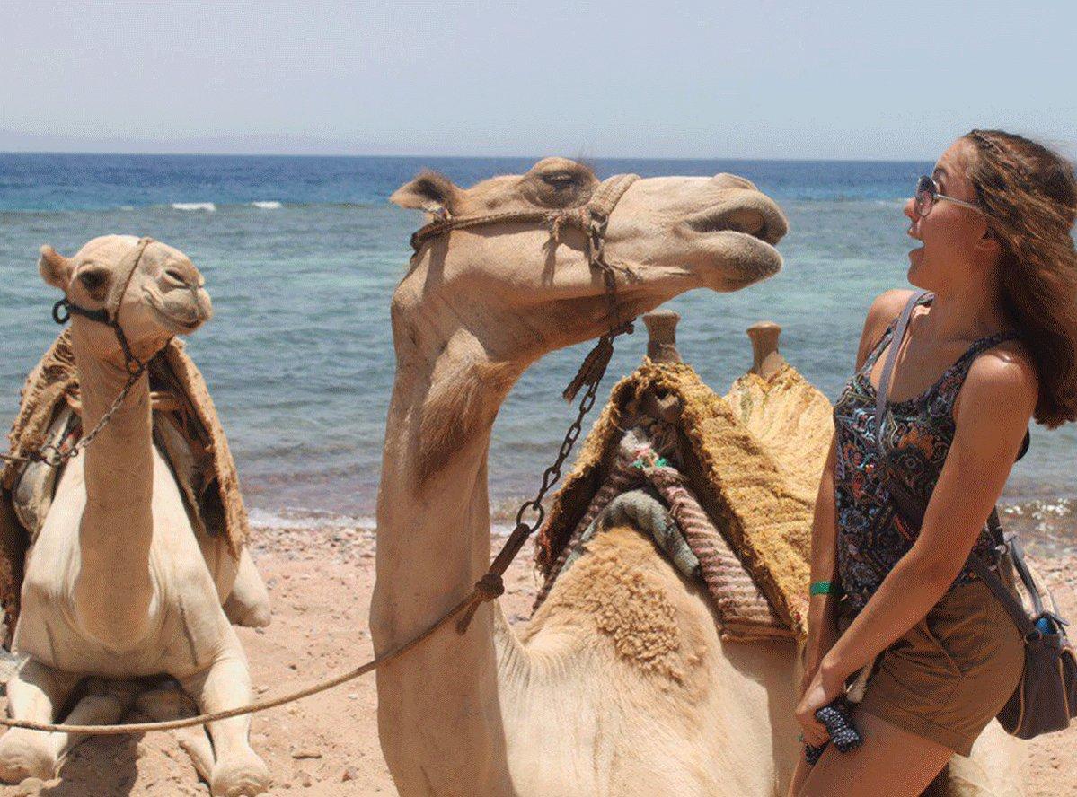 Мне, смешные картинки отдых в египет