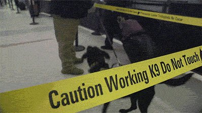 "The most reliable explosive-detection ""technology"" in TSA's arsenal? K-9 units."